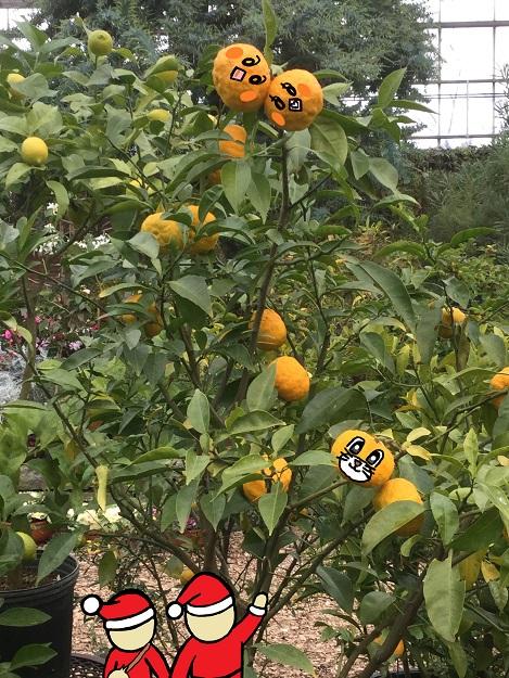 2015 冬至 南瓜 かぼちゃ 小豆 あずき 砂糖 煮物 柚子の木 ピヨめぐモカ 1.jpg