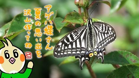 アゲハ蝶さんこんにちは.jpg