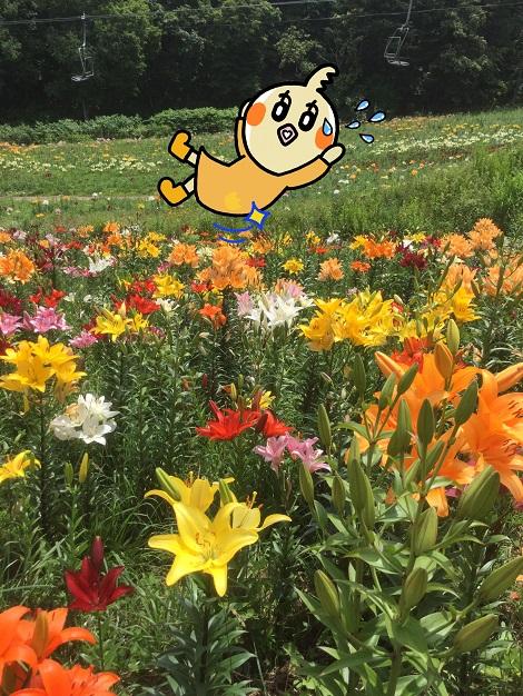 オーンズ春香山ゆり園で転んだめぐ.jpg