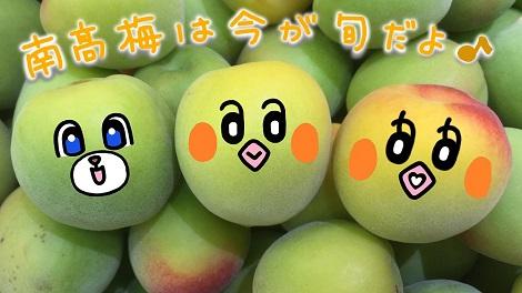 ピヨめぐモカ JA紀州 JA和歌山県農 南高梅 3.jpg