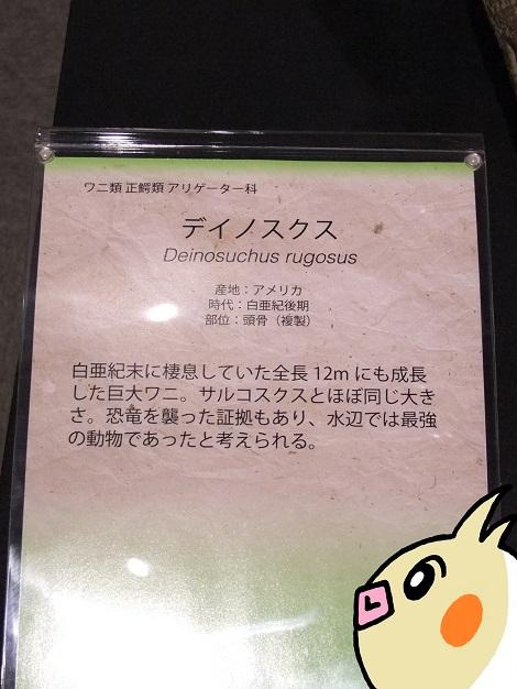 北海道大学総合博物館 10-1.JPG