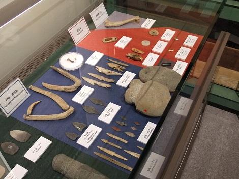 北海道大学総合博物館 15-3.JPG