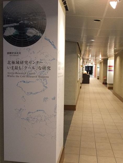 北海道大学総合博物館 3-1.JPG
