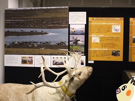 北海道大学総合博物館 3-3.JPG