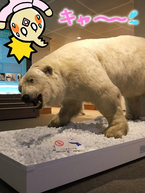 北海道大学総合博物館 3-5.jpg
