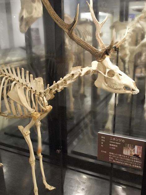 北海道大学総合博物館 6-3.JPG