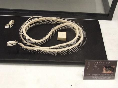 北海道大学総合博物館 7-3.JPG