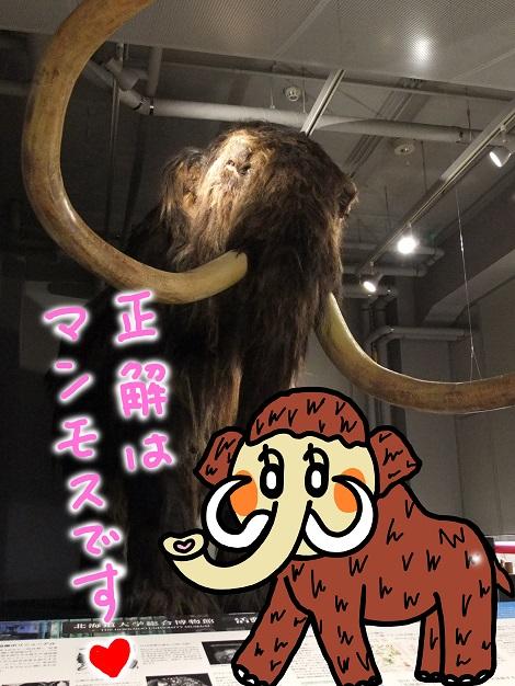 北海道大学総合博物館 8-1.jpg