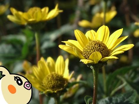 お花を眺めているめぐ.jpg
