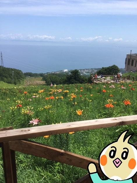 オーンズ春香山ゆり園 ピヨ.jpg