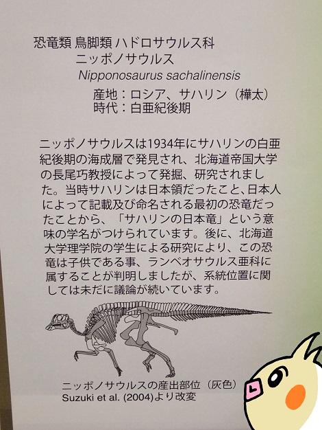 北海道大学総合博物館 10-4.JPG