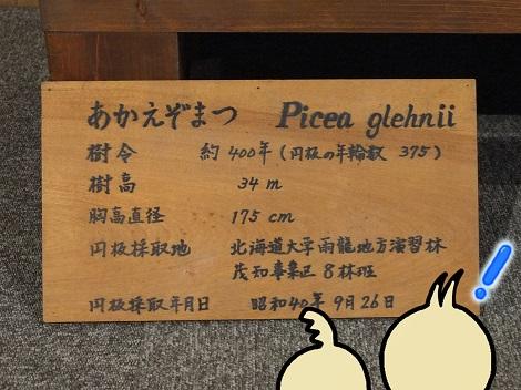北海道大学総合博物館 13-2.JPG