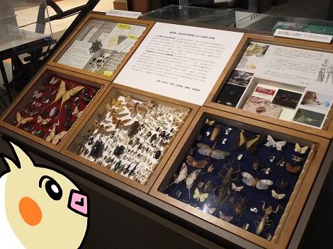 北海道大学総合博物館 13-3.JPG