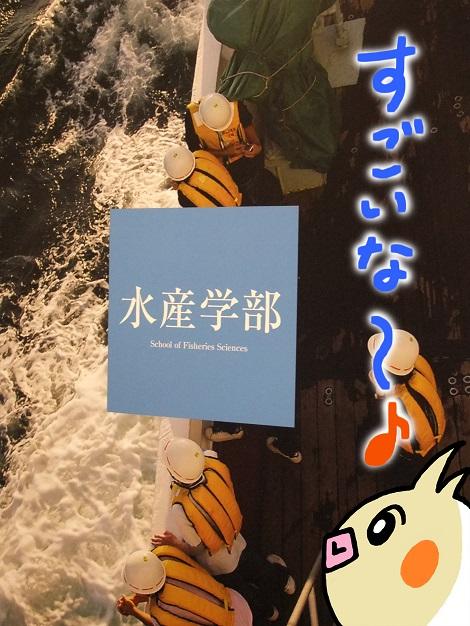 北海道大学総合博物館 4-6.JPG