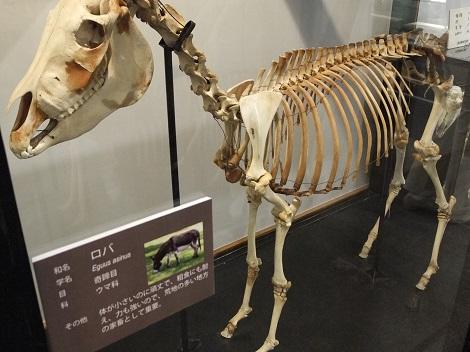 北海道大学総合博物館 6-4.JPG