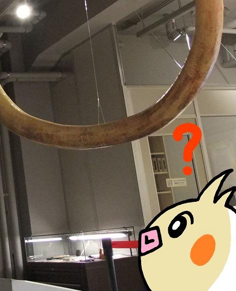 北海道大学総合博物館 7-4.jpg