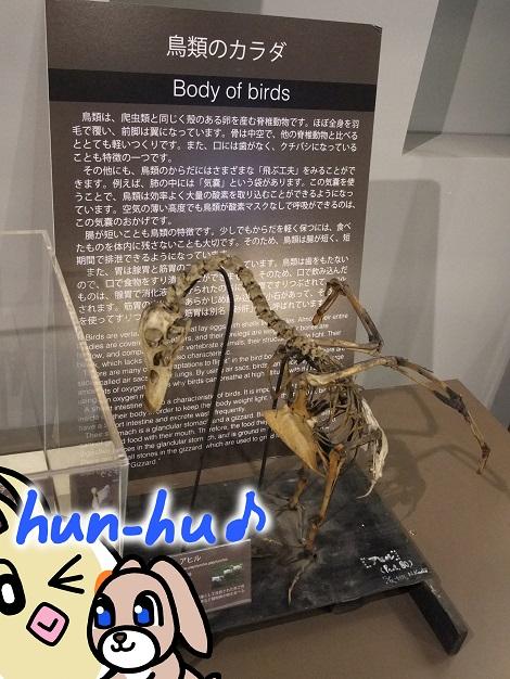 北海道大学総合博物館 7-5.jpg