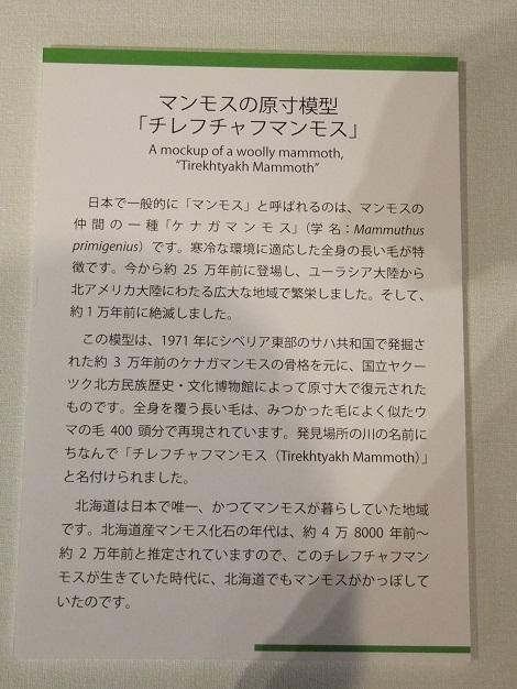 北海道大学総合博物館 8-2.JPG