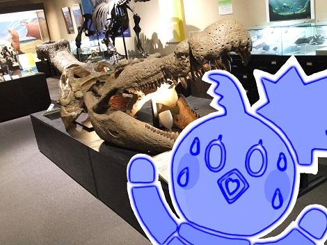 北海道大学総合博物館 9-4.JPG