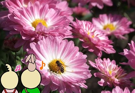 寒菊とピヨめぐモカ.jpg
