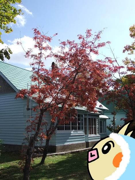 旧竹鶴邸を見学しているピヨめぐモカ.jpg