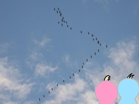 白鳥が真上まで来たよ.jpg
