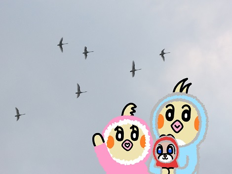白鳥飛行隊にお別れをするピヨめぐモカ.jpg
